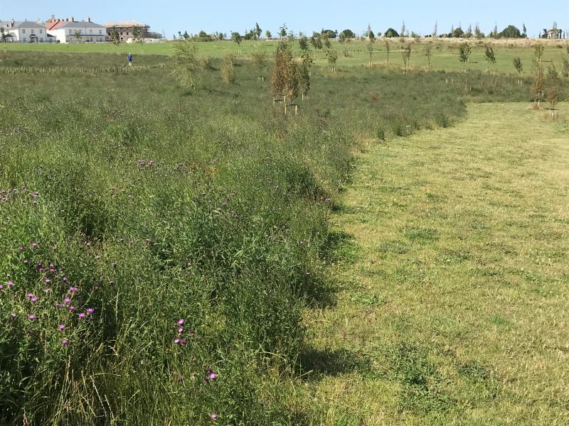 Poundbury Great Field